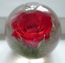 rose paperweight with images art