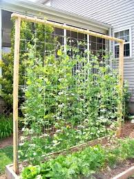 Trellis Ideas S For Weddings Making Tomatoes Peas Garden Trellis Pea Trellis Tomato Trellis