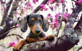 Image result for dogs in spring