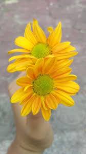 bunga melati aizsaputri likes askfm