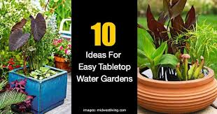 container water garden for your deck