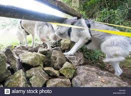 Crawling Under A Fence High Resolution Stock Photography And Images Alamy