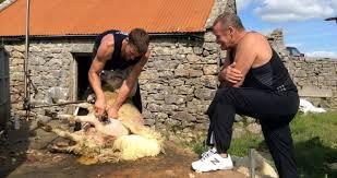 Irishman Ivan Scott crowned the fastest sheep shearer in the world ...