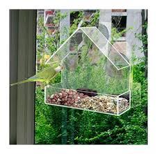 garden birds ambador wild bird