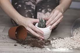 diy potting soil for succulents
