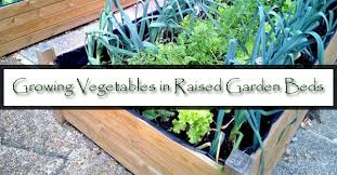 growing vegetables in raised garden