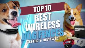 10 Best Wireless Dog Fence Reviews Of 2020 Ultimate Dog Store