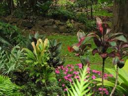 colorful plants at ahonui gardens