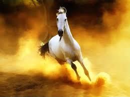 صور خيول عربية اصيلة اجمل واحلى خلفيات خيول صور خلفيات العرب