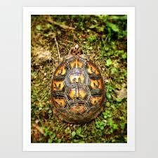 eastern box turtle shell pattern art