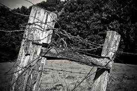 Free Images Landscape Tree Nature Forest Branch Winter Light Barbed Wire Black And White Structure Grain Sunlight Leaf Trunk Old Rustic Spring Autumn Metal Darkness Close Wood Pile Season Black White