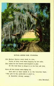 Florida Memory • Royal Arch Oak - Florida
