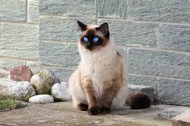 Imagen gratis: gato, al aire libre, calle, gato doméstico, calle, felino,  garra
