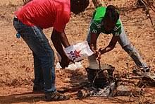 Ugali - Wikipedia