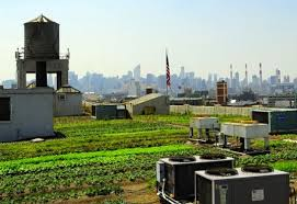 world s largest rooftop farm kicks off