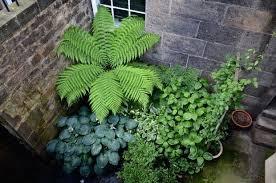 how to transform a tiny basement garden
