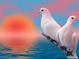 صور طيور بيضاء متحركة اجمل بنات