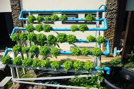 starting an outdoor hydroponic garden