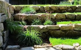native plants modern garden design
