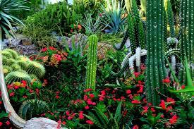 you can grow cactus in florida