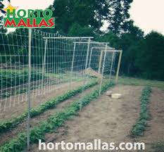 Cucumber Trellis Netting By Hortomallas Will Increase Your Income