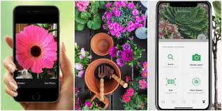 10 top gardening apps to now