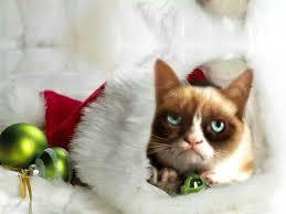 holiday grumpy kitty grumpy cat