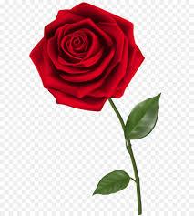 ارتفع تحميل حديقة الورود صورة بابوا نيو غينيا