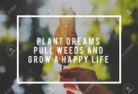 life motivation inspiration positive vibes quote on nature leaf