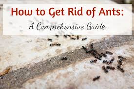 natural ant repellent plete guide