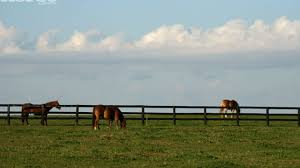 Horse Safe Fencing Options Horse Illustrated