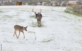 High Fence Vs Free Range A Deer Hunter S View From Both Sides Deer And Deer Hunting