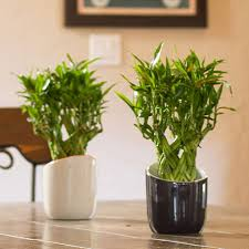 10 best low light houseplants costa farms