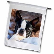 purebred boston terrier dog polyester