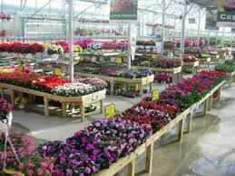 about our greenhouse plymouth nursery