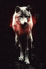 cool wolf iphone wallpapers wolf