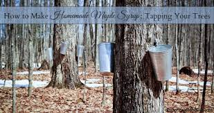 how to make homemade maple syrup