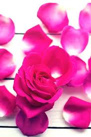 wallpaper white flower pink red petal
