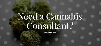 Contact Expert Cannabis Consultants | by Quantum 9, Inc. | Cannabis  Consulting Firm | Medium