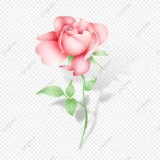تفتح وردة وردية الزهور رسمت باليد وردي Png وملف Psd للتحميل مجانا