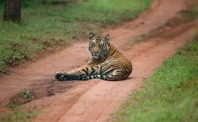 Sariska Tiger Reserve, Safari Timing, How to Reach, Best Time to Visit