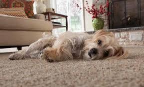 best carpet flooring por carpet
