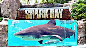 shark encounter sea world gold coast