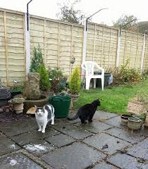 Our Previous Customers Reviews Cat Fence Cat Run Cat Proofing