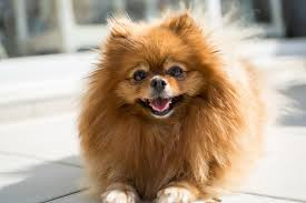 the best small dog breeds