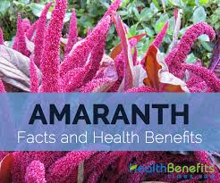 amaranth facts health benefits and