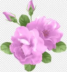 روز لافندر وردة اللوحة أرجواني بنفسجي Png