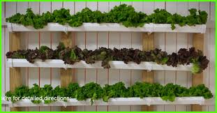 vertical gardening is the future for