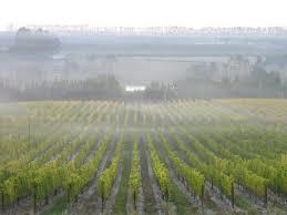 Introducing Shannon Vineyards Sanctuary Peak Sauvignon Blanc 2016 – The  Gremlin