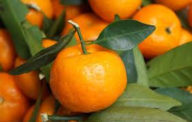 wallpaper leaves citrus mandarin